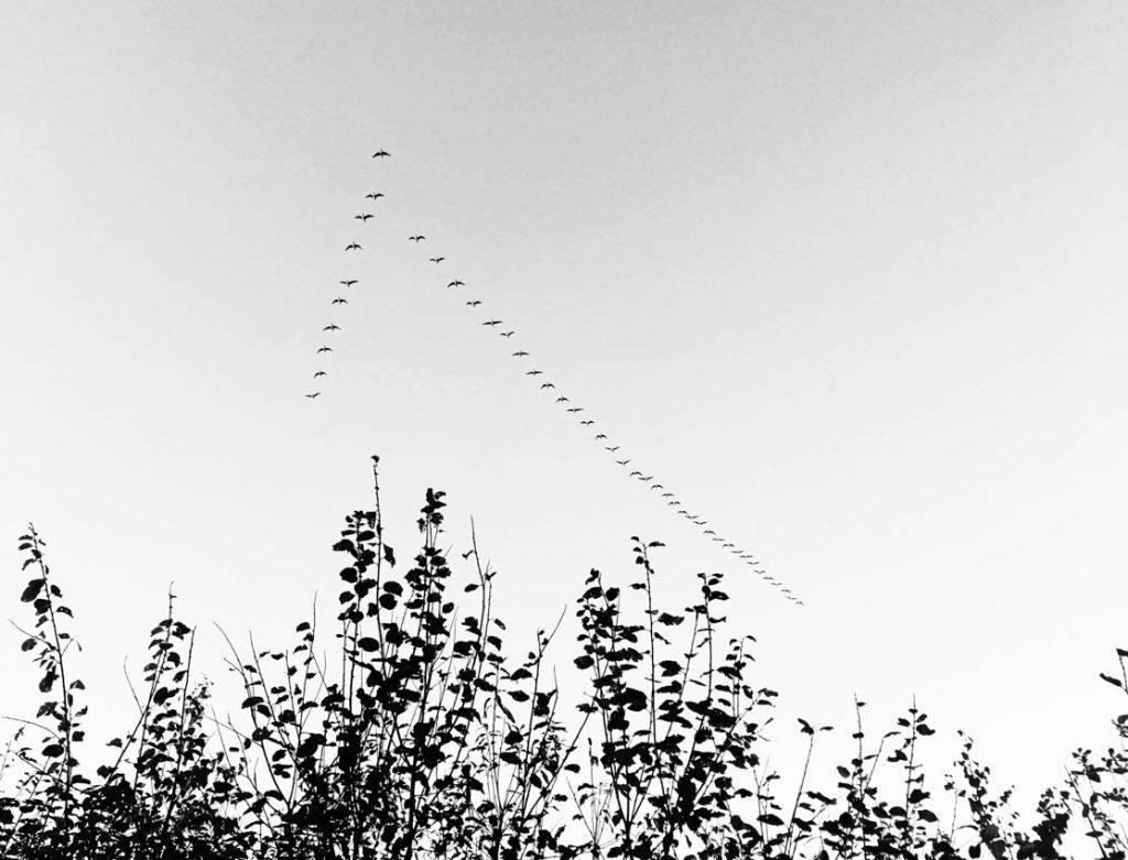 Een foto van de vogeltrek in de herfst.